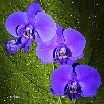 Photograph - Purple Orchids On A Vine Leaf Background With Dew Drops by Gary Crockett