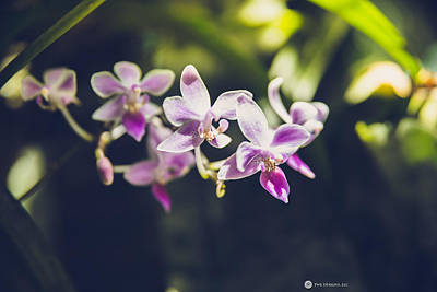 Photograph - Purple Orchids by Teresa Blanton