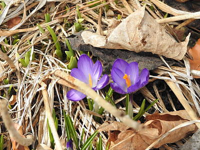 Photograph - Purple Pair by Betty-Anne McDonald