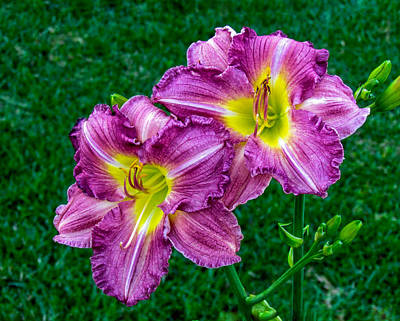 Photograph - Purple Pair by Nathan Little