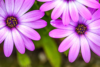 Calendar Photograph - Purple Petals by Az Jackson