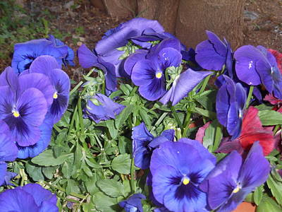 Painting - Purple Pansies by Esther Newman-Cohen