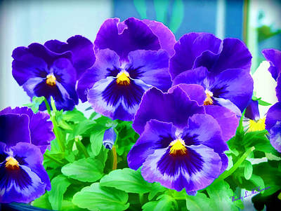 Photograph - Purple Pansies by Wendy McKennon