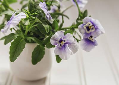 Photograph - Purple Pansy Flowers by Kim Hojnacki