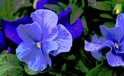 Photograph - Purple Pansy Posterized by E Faithe Lester
