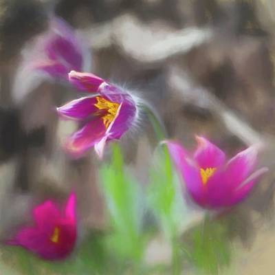 Pasque Flower Digital Art - Purple Pasque Flower by Heiko Schneider