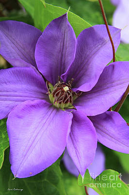 Photograph - Purple Passion Clematis Flower Art by Reid Callaway