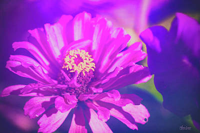 Photograph - Purple Passion Flowers by Anna Louise