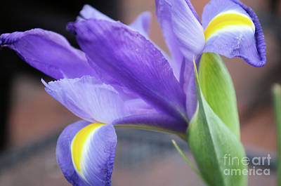 Photograph - Purple Passion by John S