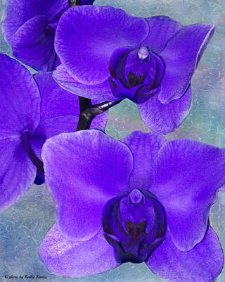 Photograph - Purple Passion Orchid by Kathy M Krause