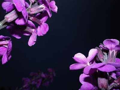 Photograph - Purple Passion by Richard Brookes