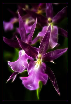 Photograph - Purple Passion by Ricky Barnard