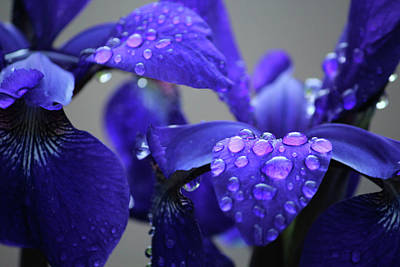 Purple Passion Art Print by Rowana Ray