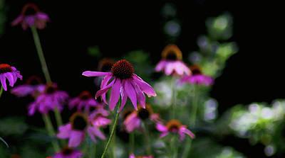 Digital Art - Purple Passion by Susan Vineyard