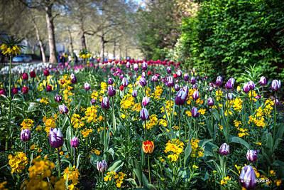 Photograph - The Queen's Garden by Walt  Baker