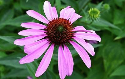 Digital Art - Purple Petals  by Lyle Crump