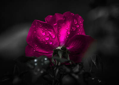Photograph - Purple Petals by Parker Cunningham