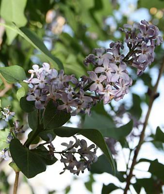 Rosamond California Photograph - Purple Petals by Samantha Cowmeadow