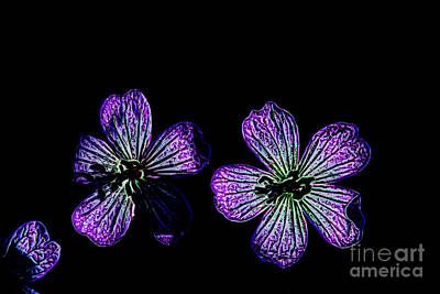 Photograph - Purple Petals by Steven Parker
