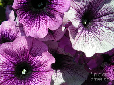 Purple Petunia Paradise Art Print