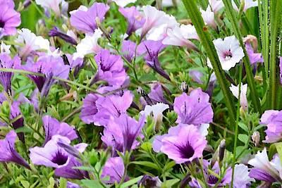 Photograph - Purple Petunias by Kim Bemis