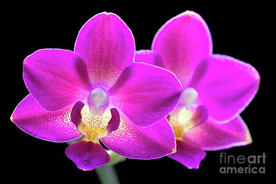 Photograph - Purple Phalaenopsis #0855 by David Perry Lawrence