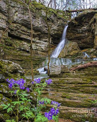 Photograph - Purple Phalcelia At Pocket Branch Falls by Barbara Bowen