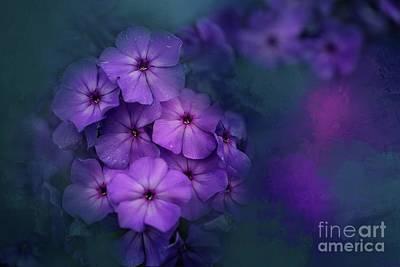 Photograph - Purple Phlox by Eva Lechner