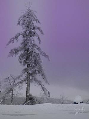 Photograph - Purple Pine by Jamie Johnson