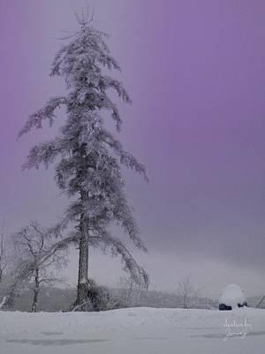 Photograph - Purple Pine by Jamie Johnson