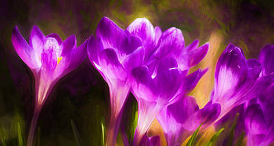 Wall Art - Photograph - Purple Pleasure by Michel Emery
