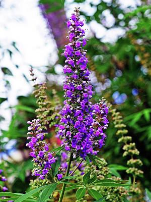 Photograph - Purple Pleasures by Bob Johnson