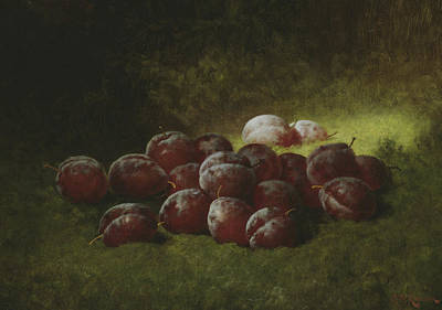 Healthy Eating Painting - Purple Plums by Carducius Plantagenet Ream