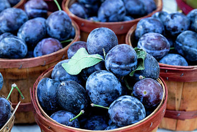Locally Grown Photograph - Purple Plums by Teri Virbickis