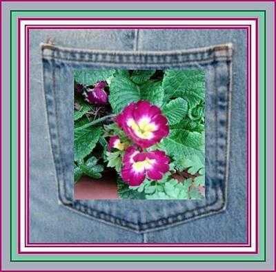 Photograph - Purple Pocket Flower by Julia Woodman