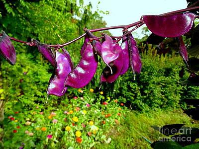 Photograph - Purple Pods by Ed Weidman