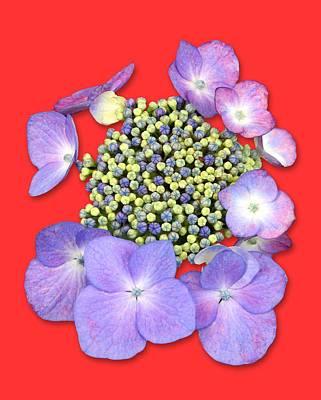 Photograph - Purple Pods Sehemu Mbili Unyenyekevu by Bob Slitzan