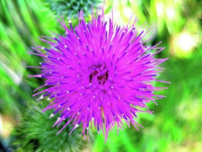 Photograph - Purple Pop by Kathy Bassett
