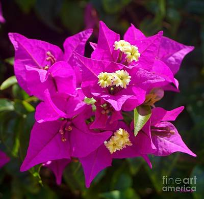 Bold Flower Painting - Purple Posy by John Clark