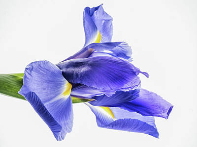 Photograph - Greek Goddess Of The Rainbow, Iris by Robin Zygelman