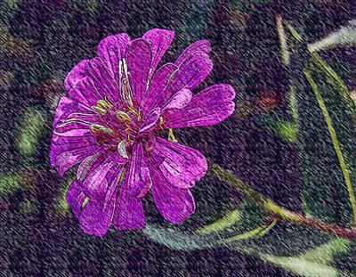 Photograph - Purple Purple Purple by Leticia Latocki