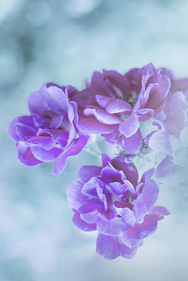 Photograph - Purple Radiance by Elvira Pinkhas