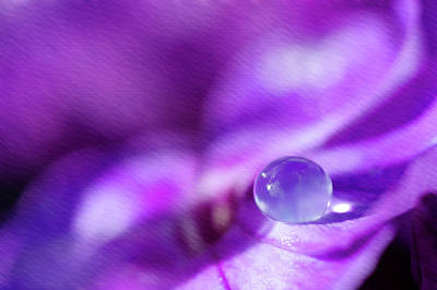 Photograph - Purple Rain Drop by Crystal Wightman