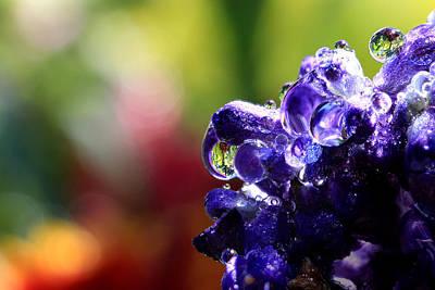 Purple Rain Art Print by Gary Yost
