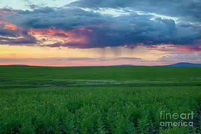 Photograph - Purple Rain by Idaho Scenic Images Linda Lantzy