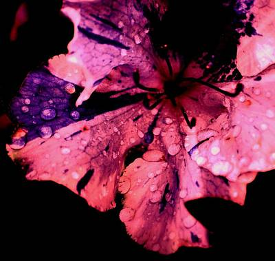 Purple Rain Art Print by Trudi Southerland