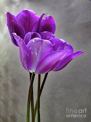 Airport Maps - Purple Rain - Tulips by Cindy Treger