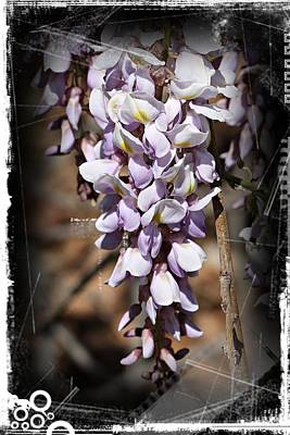 Photograph - Purple Rain- Wisteria- Fine Art by KayeCee Spain