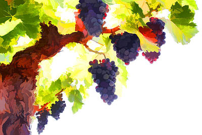 Purple Red Grapes With Green Leaves On The Vine Art Print by Lanjee Chee