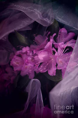 Photograph - Purple Rhododendron Abstract by Tara Shalton